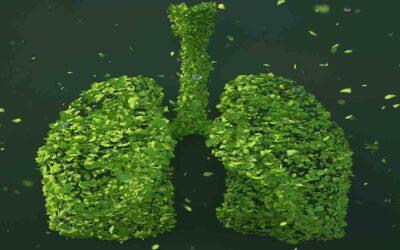 Lungen  Adenokarzinom